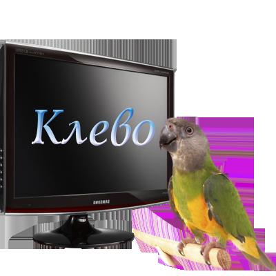 91747013_89427496_80214035_klevo (400x400, 124Kb)