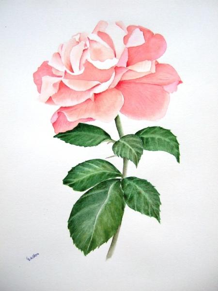 Акварелью красивые цветы акварелью