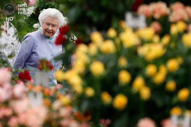 фестиваль цветов в лондоне фото 2 (670x447, 275Kb)