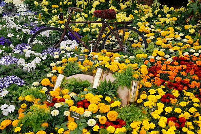 фестиваль цветов в лондоне фото 3 (670x447, 704Kb)