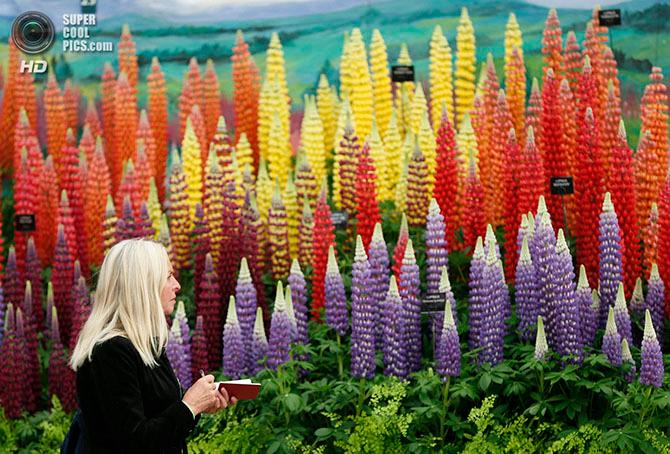 фестиваль цветов в лондоне фото 5 (670x454, 481Kb)