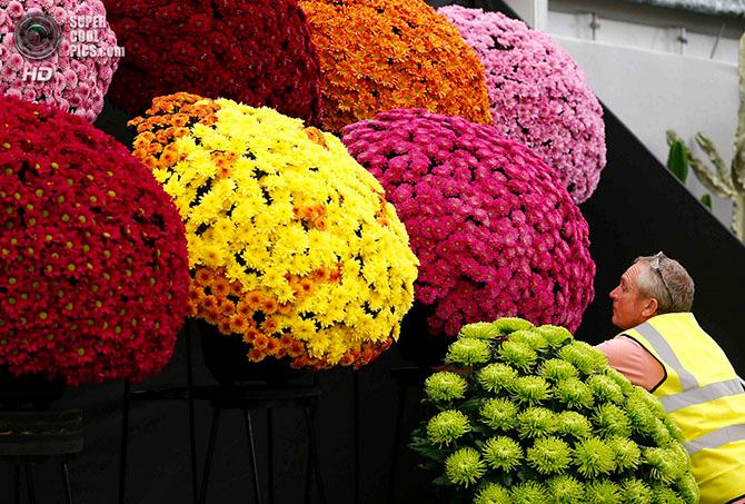 фестиваль цветов в лондоне фото 6 (670x453, 513Kb)