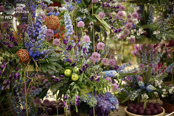 фестиваль цветов в лондоне фото 8 (670x447, 410Kb)