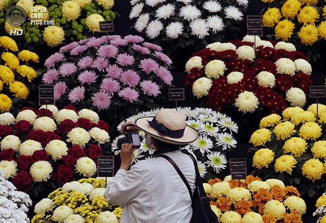 фестиваль цветов в лондоне фото 10 (670x458, 400Kb)