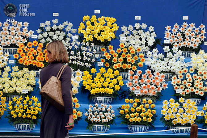фестиваль цветов в лондоне фото 21 (670x447, 564Kb)