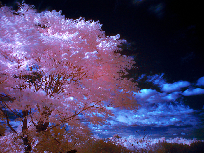 Infrared_Photography_02 (700x525, 530Kb)