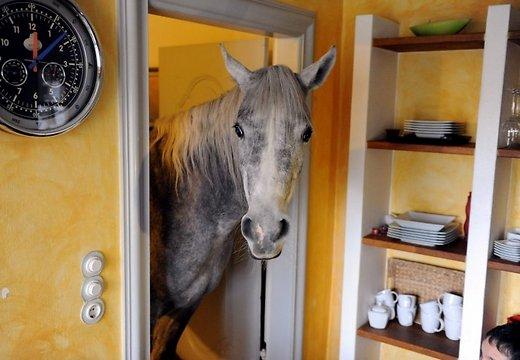 лошадь (520x360, 39Kb)