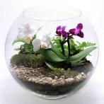 florarium_Sad_Orhidey-147x147 (147x147, 7Kb)