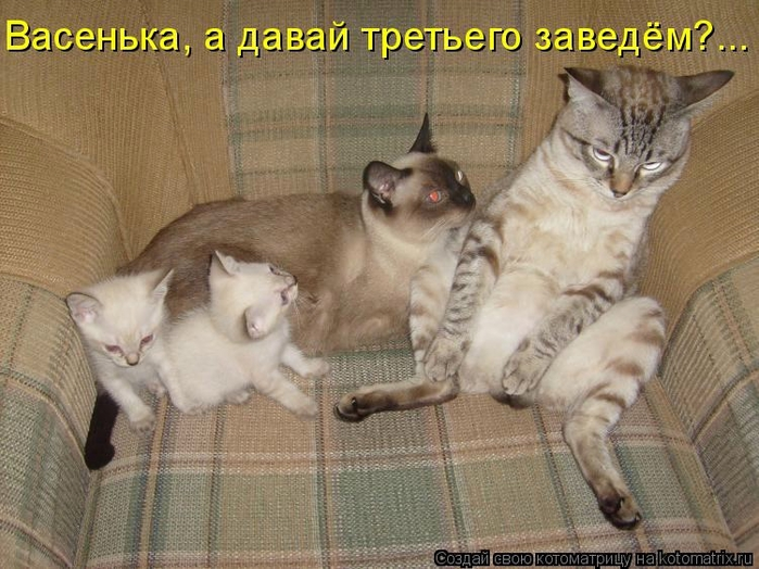 kotomatritsa_Ak (700x524, 287Kb)