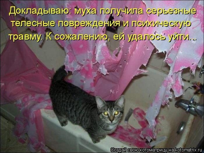 kotomatritsa_O (700x525, 179Kb)