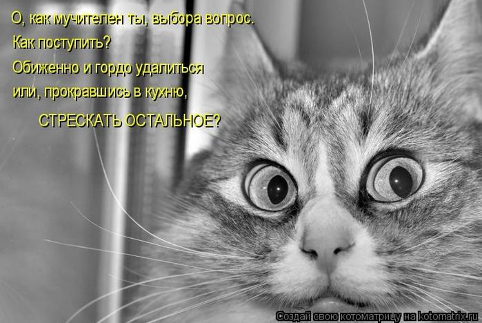 kotomatritsa_r3 (700x468, 212Kb)