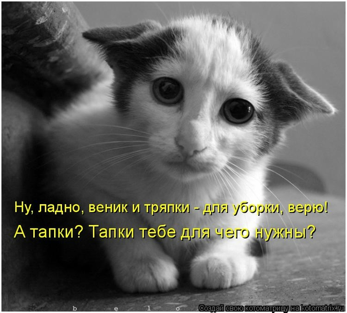 kotomatritsa_VL (700x630, 224Kb)