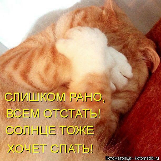 kotomatritsa_UI (612x612, 194Kb)