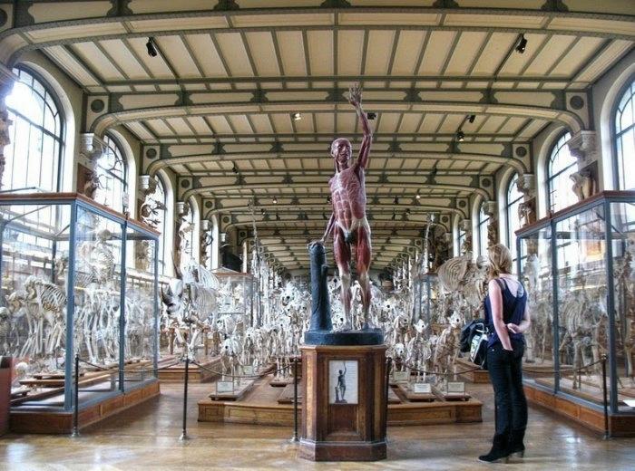 музей естественной истории франция 2 (700x520, 232Kb)