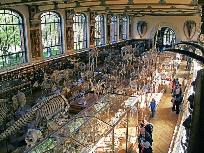 музей естественной истории франция 4 (700x524, 301Kb)