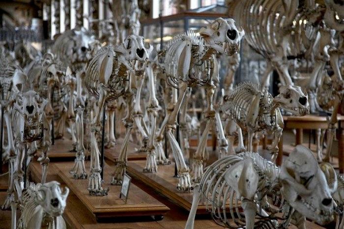 музей естественной истории франция 6 (700x466, 190Kb)