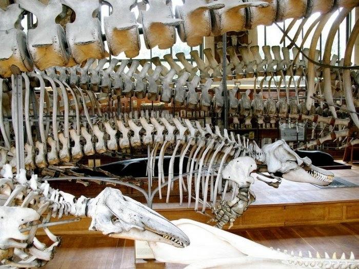 музей естественной истории франция 8 (700x524, 256Kb)