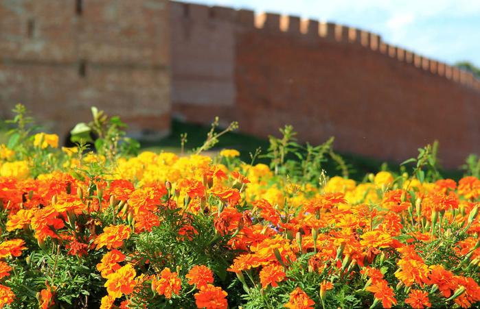 Gospodin-Velikiy-Novgorod (700x451, 485Kb)