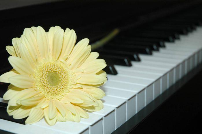цветок-на-клавишах (700x464, 31Kb)