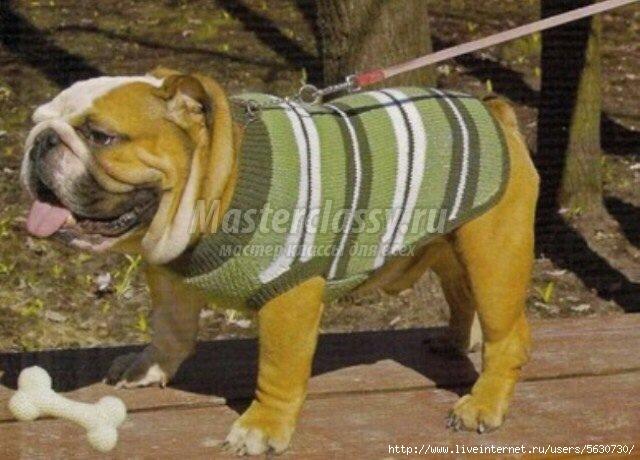 Вязание для собак спицами.
