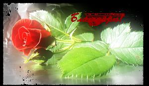 1348593383_blagodaryu-s-rozoy.jpg (300x173, 111Kb)