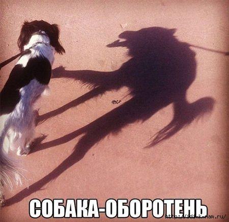 смешные прикольные фото собак животных