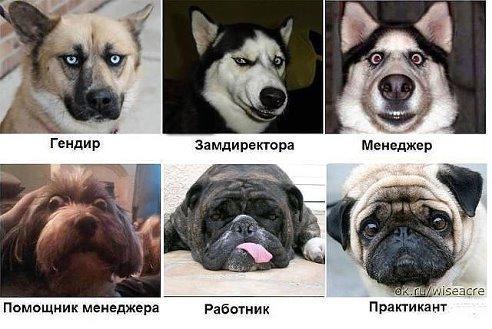 smeshnie_kartinki_140092450031 (492x329, 151Kb)