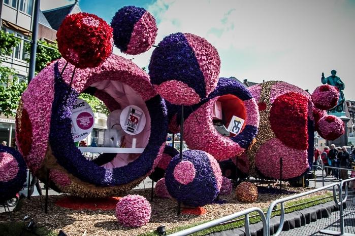парад цветов нидерланды 3 (700x466, 307Kb)