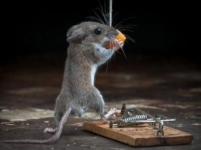 мышь фото 19 (700x525, 165Kb)