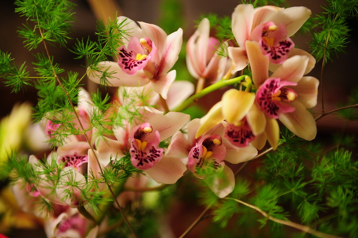 flora01 (610x400, 410Kb)