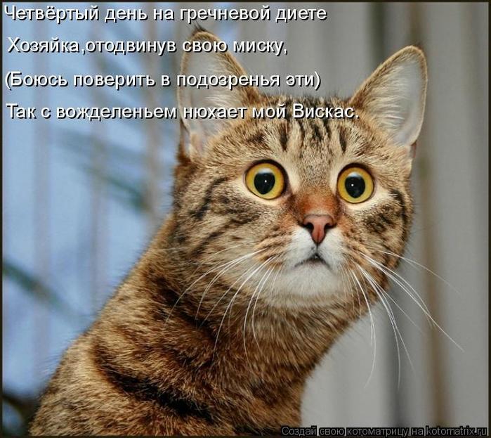 kotomatritsa_4F (700x623, 308Kb)