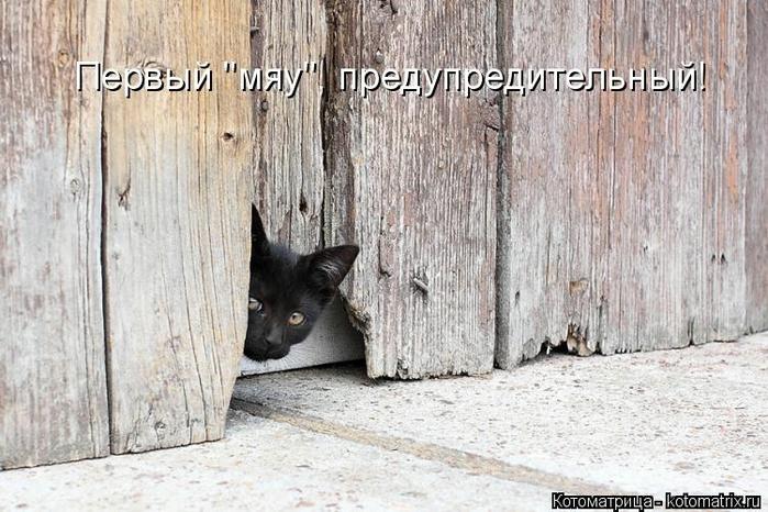 kotomatritsa_gT (700x466, 275Kb)