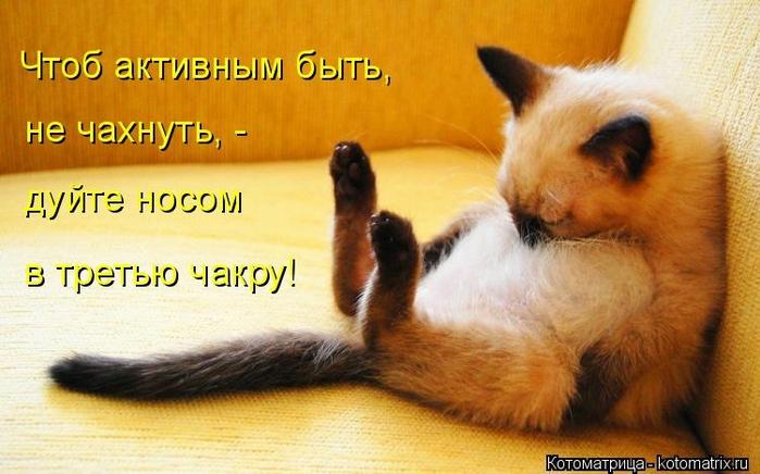 kotomatritsa_u2 (700x436, 224Kb)