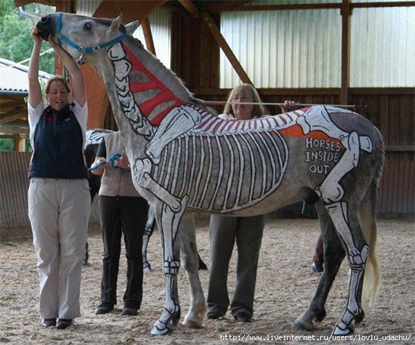 анатомия лошади, строение