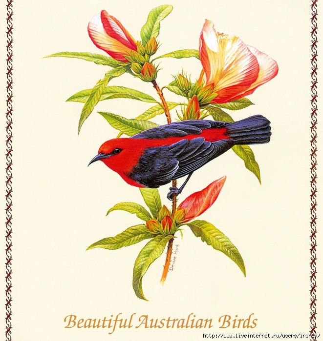 MS-4th_Beautiful_Australian_Birds_2004_001_Front_Cover1 (661x700, 362Kb)