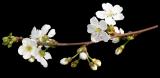 цветы (160x78, 13Kb)