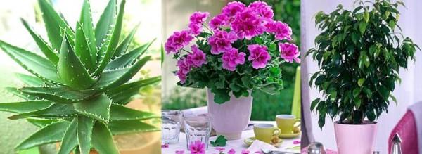 виды комнатных цветов фото: