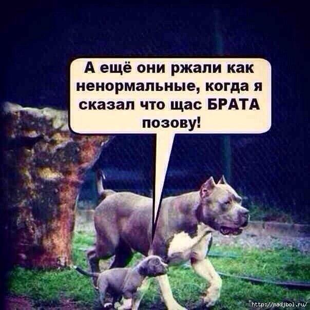 nadjibok58/5186405_TajvPjyBTK4 (604x604, 138Kb)