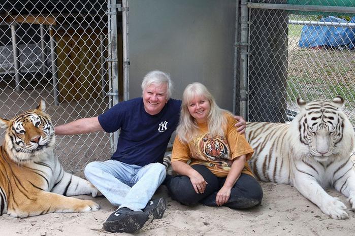 домашние тигры фото 2 (700x465, 420Kb)
