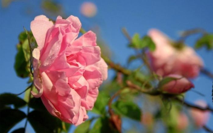 aroma_flowers_01 (700x437, 69Kb)