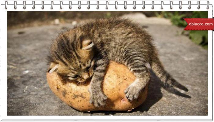 Картофель, запеченный в пергаменте/3518263_ket (700x400, 417Kb)