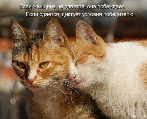 smeshnie_kartinki_140147110839 (500x403, 165Kb)