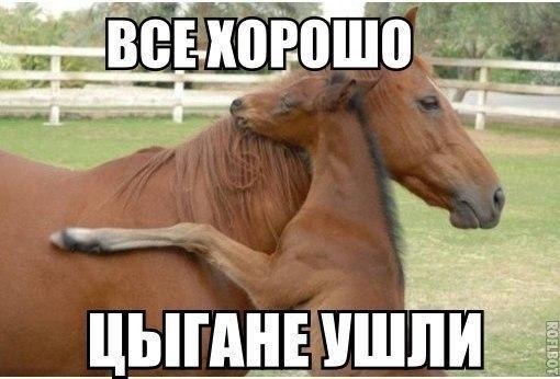 smeshnie_kartinki_140135561833 (510x346, 142Kb)