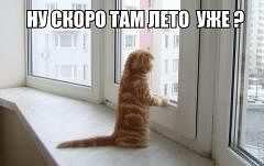 Кот у окна (240x151, 5Kb)