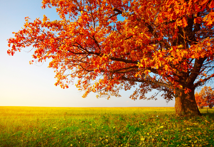 autumn9 (700x482, 724Kb)