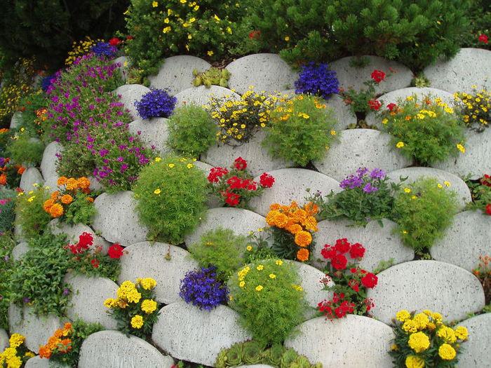 Цветы для клумбы от компании Зеленый капитал (1) (700x525, 118Kb)