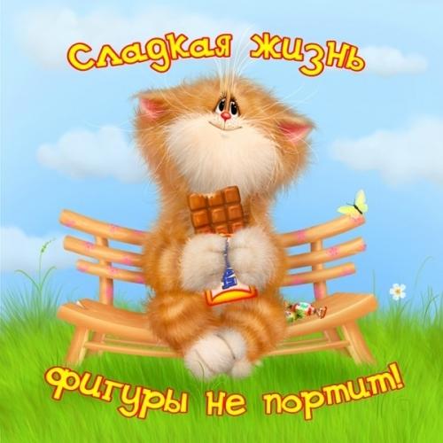 4497417_1316922932_www_nevsepic_com_ua_kotsshokoladkoy (500x500, 170Kb)