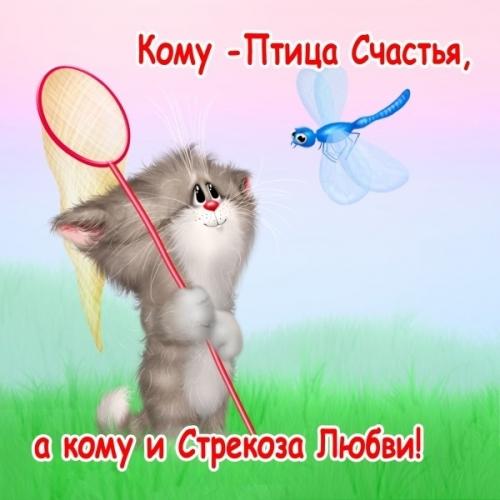 4497417_1316922965_www_nevsepic_com_ua_kotikssachkom (500x500, 146Kb)
