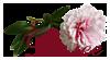 5230261_dalee_rozochka (100x55, 11Kb)