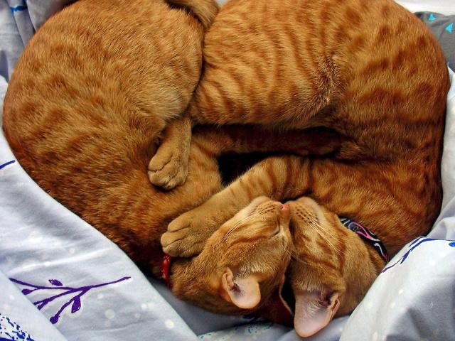 Animals_Cats_Twins_028050_29 (640x480, 191Kb)